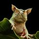 Аватар пользователя Darmidonush