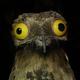 Аватар пользователя DobrySmolensk