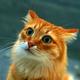 Аватар пользователя romaseff