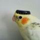 Аватар пользователя FADED1