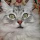 Аватар пользователя Stratocruiser
