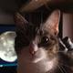 Аватар пользователя KotPomojnyj