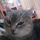 Аватар пользователя daeslikto