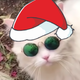 Аватар пользователя Kotrovert