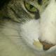 Аватар пользователя Tafia