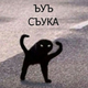 Аватар пользователя CountessBroccoli