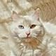 Аватар пользователя Yokszz