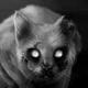 Аватар пользователя Tcoon