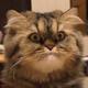 Аватар пользователя Mustein1