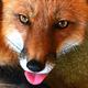 Аватар пользователя ICraftyFox