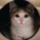 Аватар пользователя MeowHusk