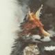 Аватар пользователя Foxcap