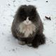 Аватар пользователя Virginia21