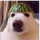 Аватар пользователя spy45242