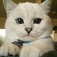 Аватар пользователя LittleHappyCat