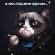 Аватар пользователя Lionsfur