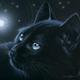 Аватар пользователя Fog129