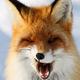 Аватар пользователя Kam4atka