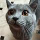 Аватар пользователя simpe311