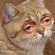 Аватар пользователя Iverd