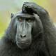 Аватар пользователя DualFazzA