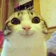 Аватар пользователя TworogOK
