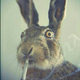 Аватар пользователя jack1edaniel