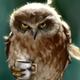 Аватар пользователя OrdieLemaire