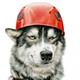 Аватар пользователя Wolf4el