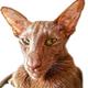 Аватар пользователя MyPJIO
