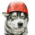 Wolf4el