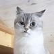 Аватар пользователя korovushkin