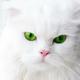 Аватар пользователя mOsobay