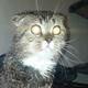 Аватар пользователя shtep