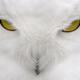 Аватар пользователя BBritvin