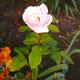 Аватар пользователя Pluton09