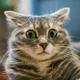 Аватар пользователя NeciyV