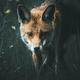 Аватар пользователя Murakichka