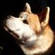 Аватар пользователя Animenation