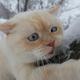 Аватар пользователя Eizen