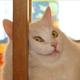 Аватар пользователя MosLock