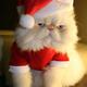 Аватар пользователя Liget93