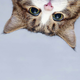 Аватар пользователя Yarxi