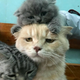 Аватар пользователя YuriYY
