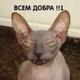 Аватар пользователя TolkoZlo666