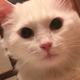 Аватар пользователя Sernef2021