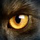 Аватар пользователя yelloweyes