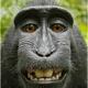 Аватар пользователя Begali