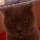 Аватар пользователя dmitrykondrashin