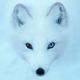 Аватар пользователя BALAMUTT1226